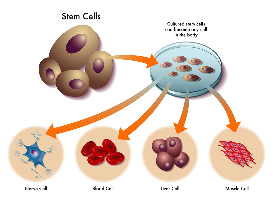 bigstock-stem-cells-74626423 (1).jpg
